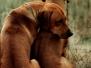 Kakuli delle Cime BIanche